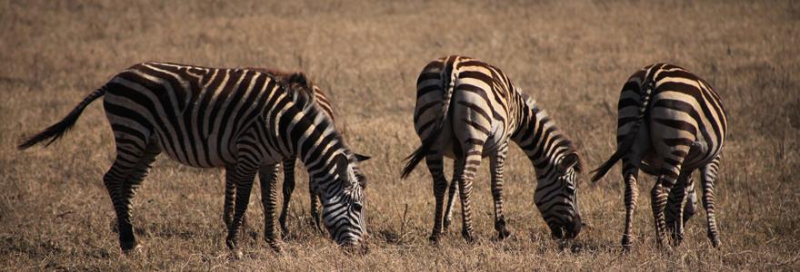 safari Tanzanie et Zanzibar